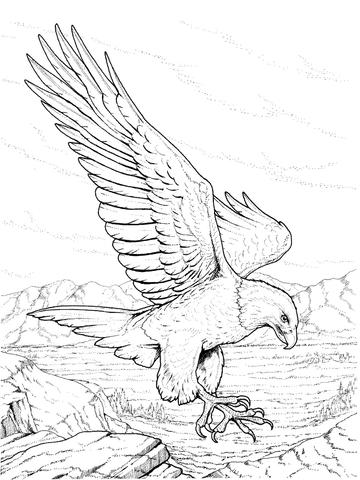 360x480 North American Bald Eagle Coloring Page Coloring Fun
