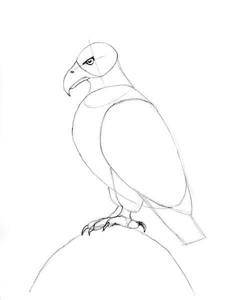 464x600 Drawing A Bald Eagle Feet Detail Art Bald Eagle