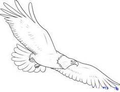 236x182 Bald Eagle Drawing 14 Drawing Eagle Drawing, Bald