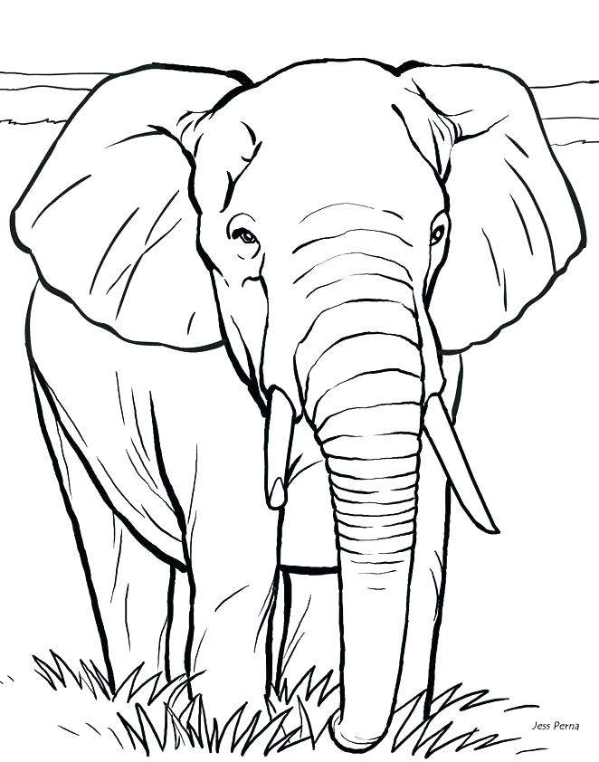 662x842 Real Animal Coloring Pages Animal Coloring Pages Online Real
