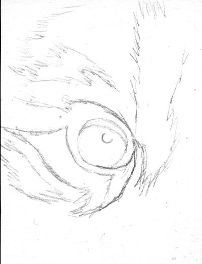 400x524 Drawing Realistic Tiger Eye