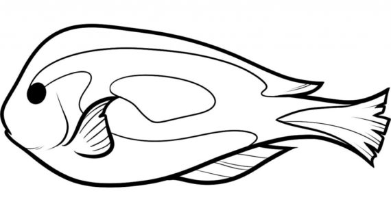 570x320 How To Draw A Realistic Fish Artiqueryrose I Caught A Fish