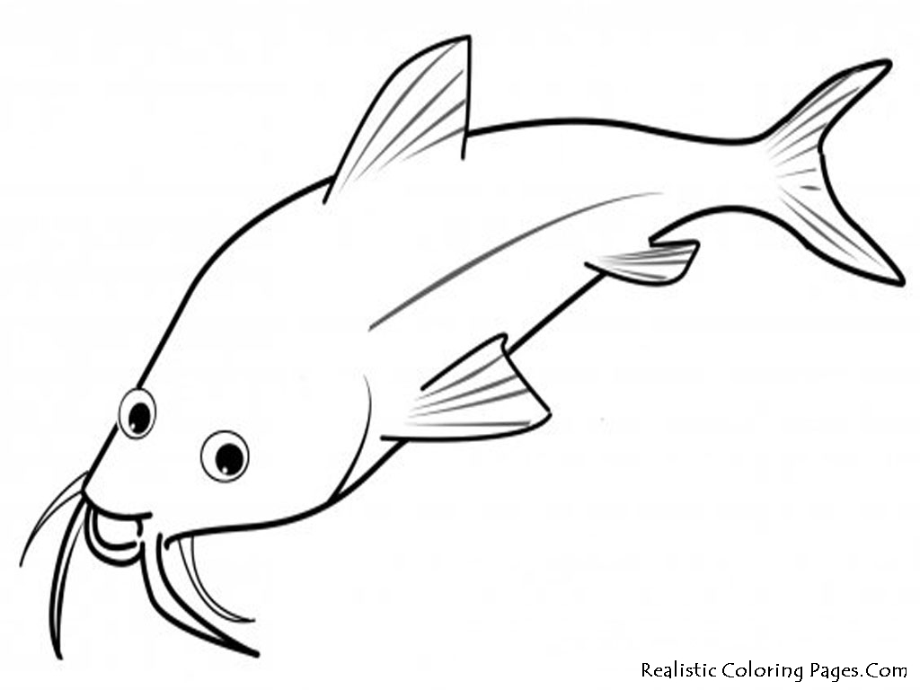 1024x768 Realistic Fish Coloring Pages