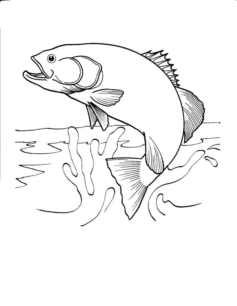 795x1024 Realistic Fish Coloring Pages Blanks Black N White Part 6