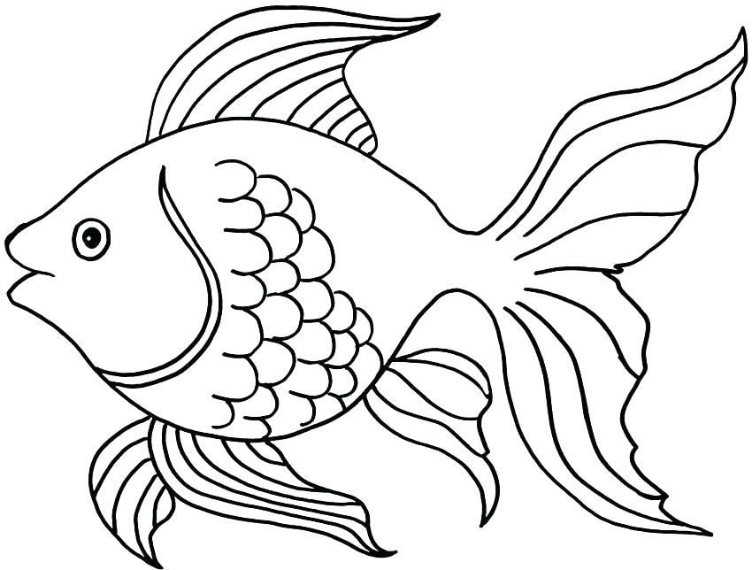 850x644 Realistic Fish Coloring Pages Fish Color Pages Fish Coloring Page