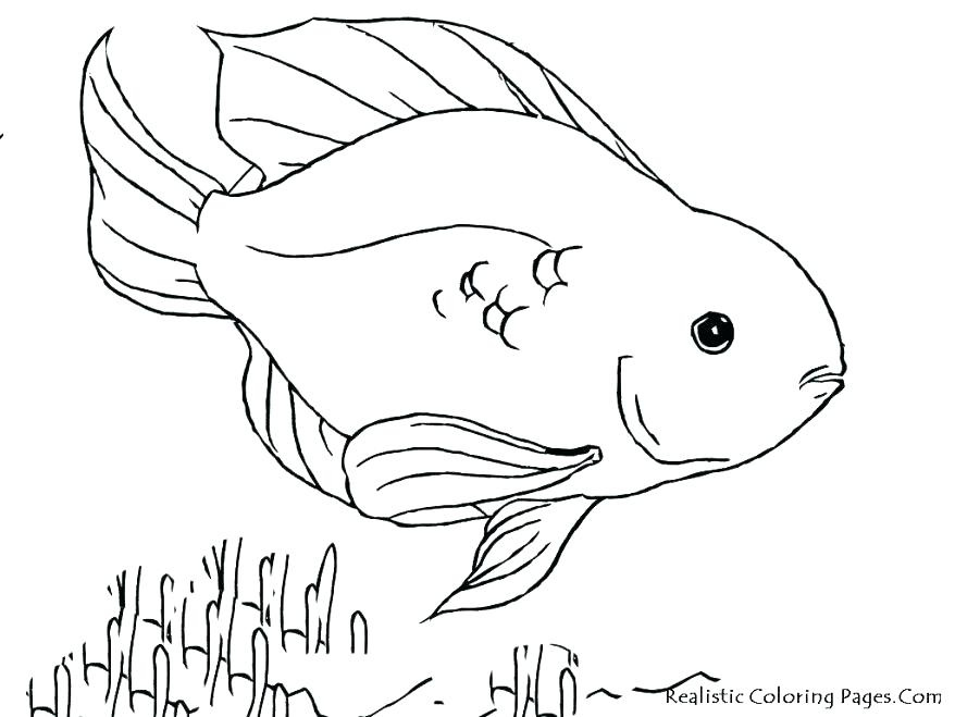 878x659 Realistic Fish Coloring Pages Realistic Coloring Tropical Fish