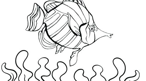 500x280 Realistic Fish Coloring Pages Realistic Fish Coloring Pages
