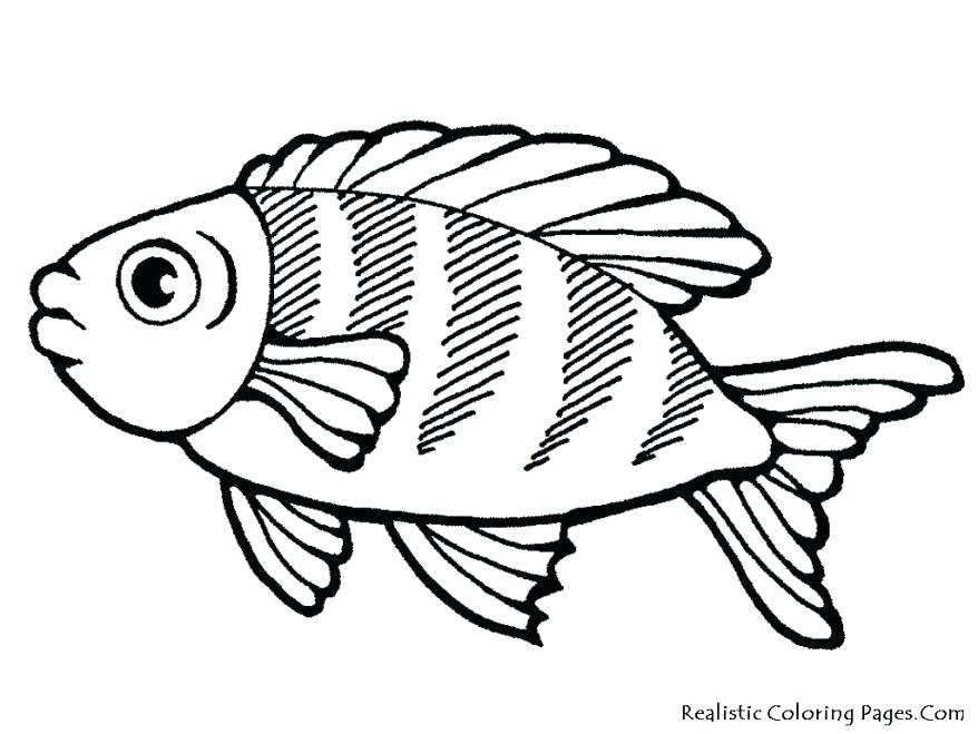 878x659 Tropical Fish Coloring Pages Coloring Sea Life Coloring Pages