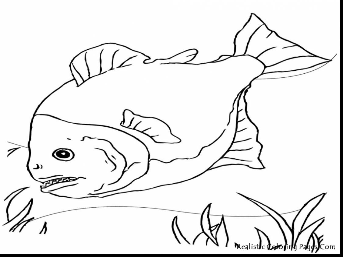 1126x844 Stunning Fish Drawing Coloring Pages With Fishing Coloring Pages