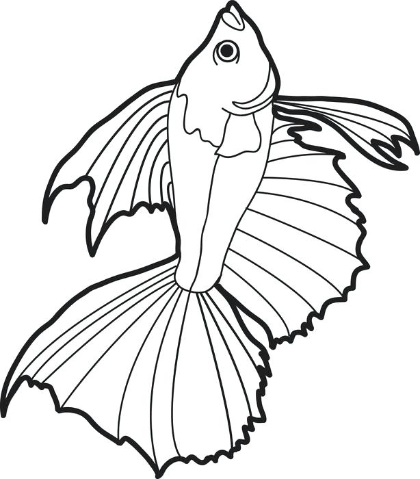 614x700 Fish Coloring Books Printable Realistic Fish Coloring Page