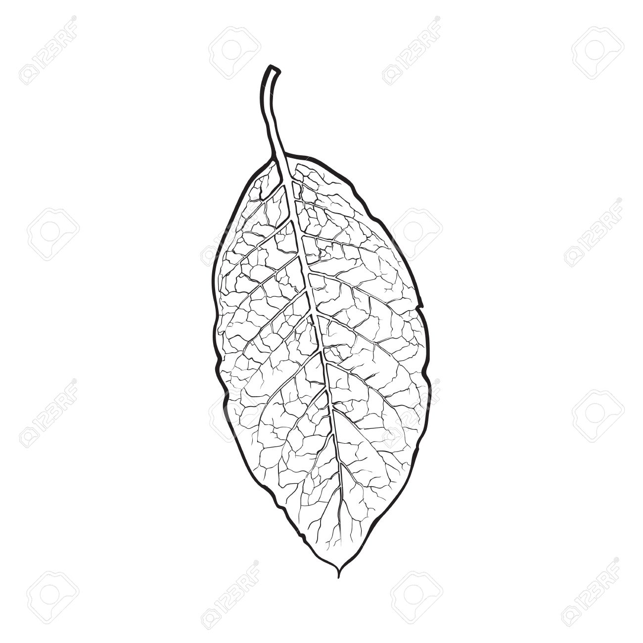1300x1300 Hand Drawn Dry Tobacco Leaf, Sketch Vector Illustration Isolated