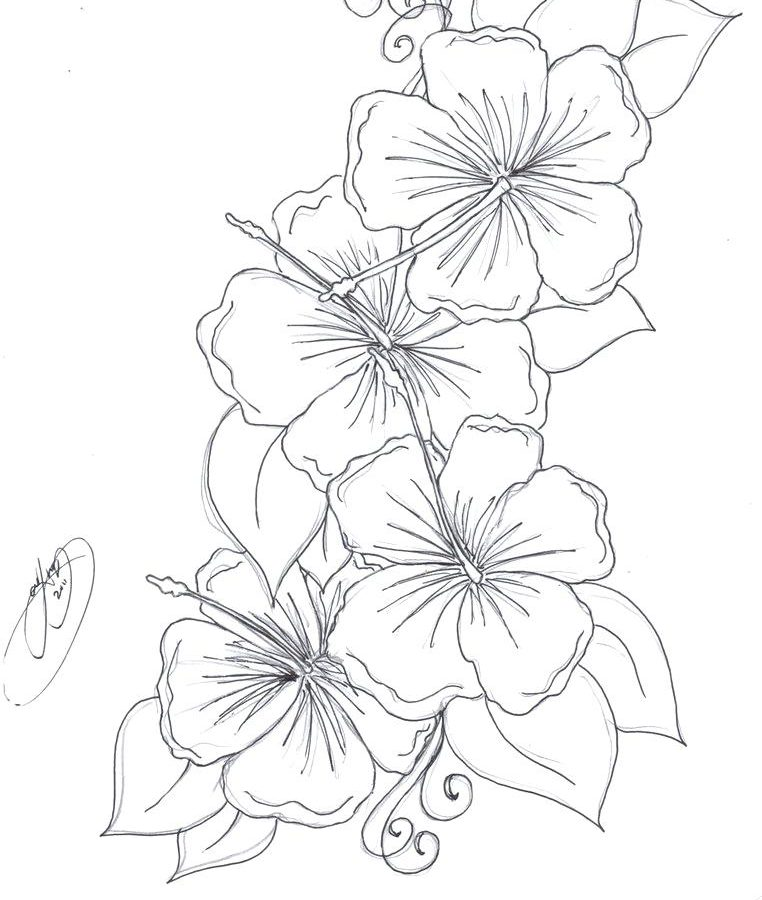 762x900 Flower Coloring Pages To Print Hibiscus Page For Kids Flowers