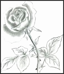 220x255 Pretty Flower Sketches Snvcn Inspirational 40 Beautiful Flower