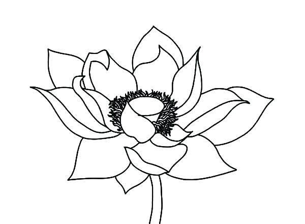 600x440 Realistic Flower Coloring Pages Free Printable Detailed Flowers
