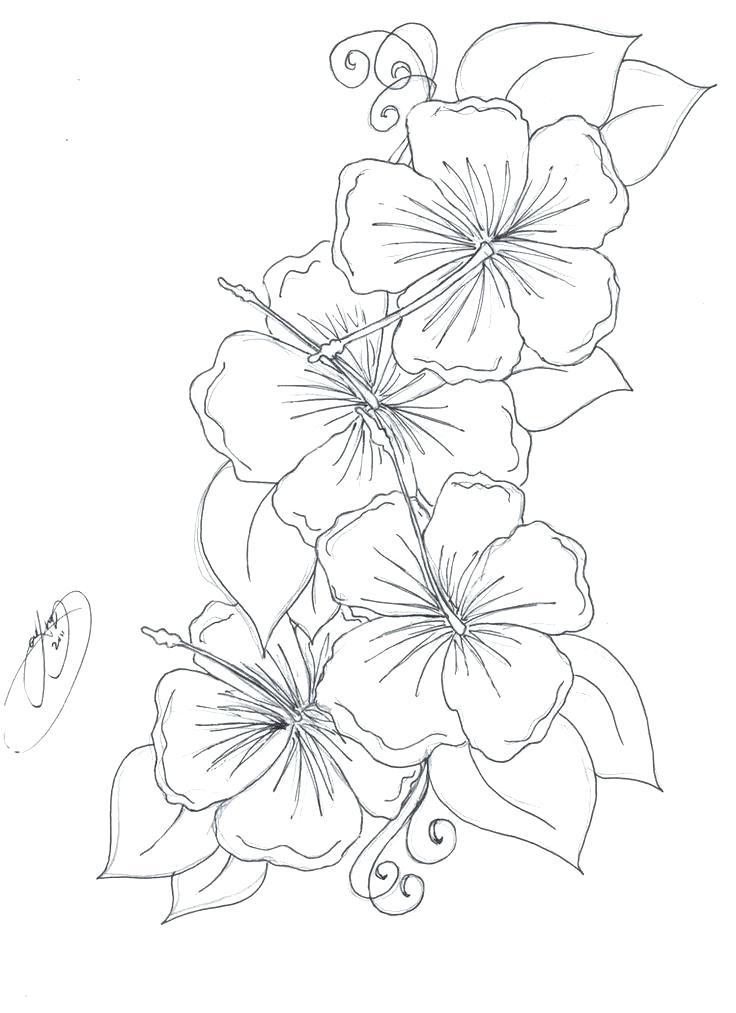 736x1013 Realistic Flower Coloring Pages Realistic Flower Coloring Pages