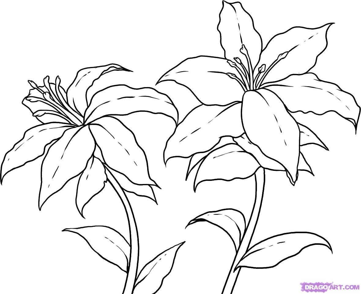 1180x962 Adult Flower Draw Flower Draw Tumblr. Flower Drawing Patterns