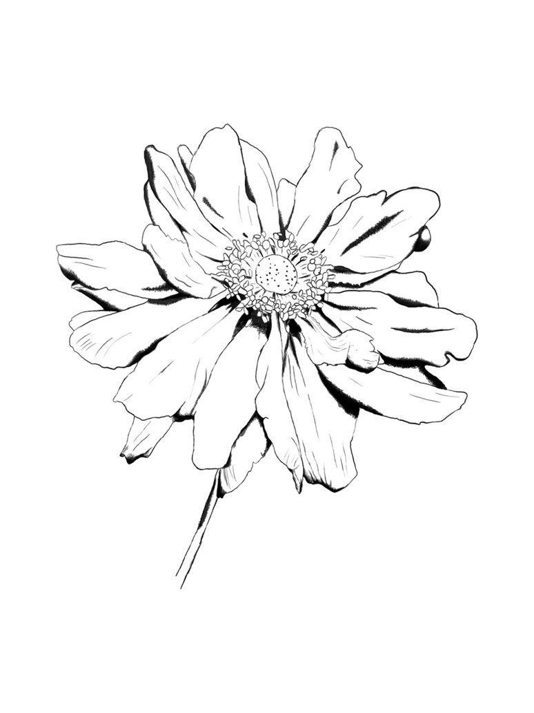774x1032 Flower Drawings Flower Drawing By Kingrowena