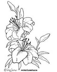 240x300 Realistic Flower Coloring Pages