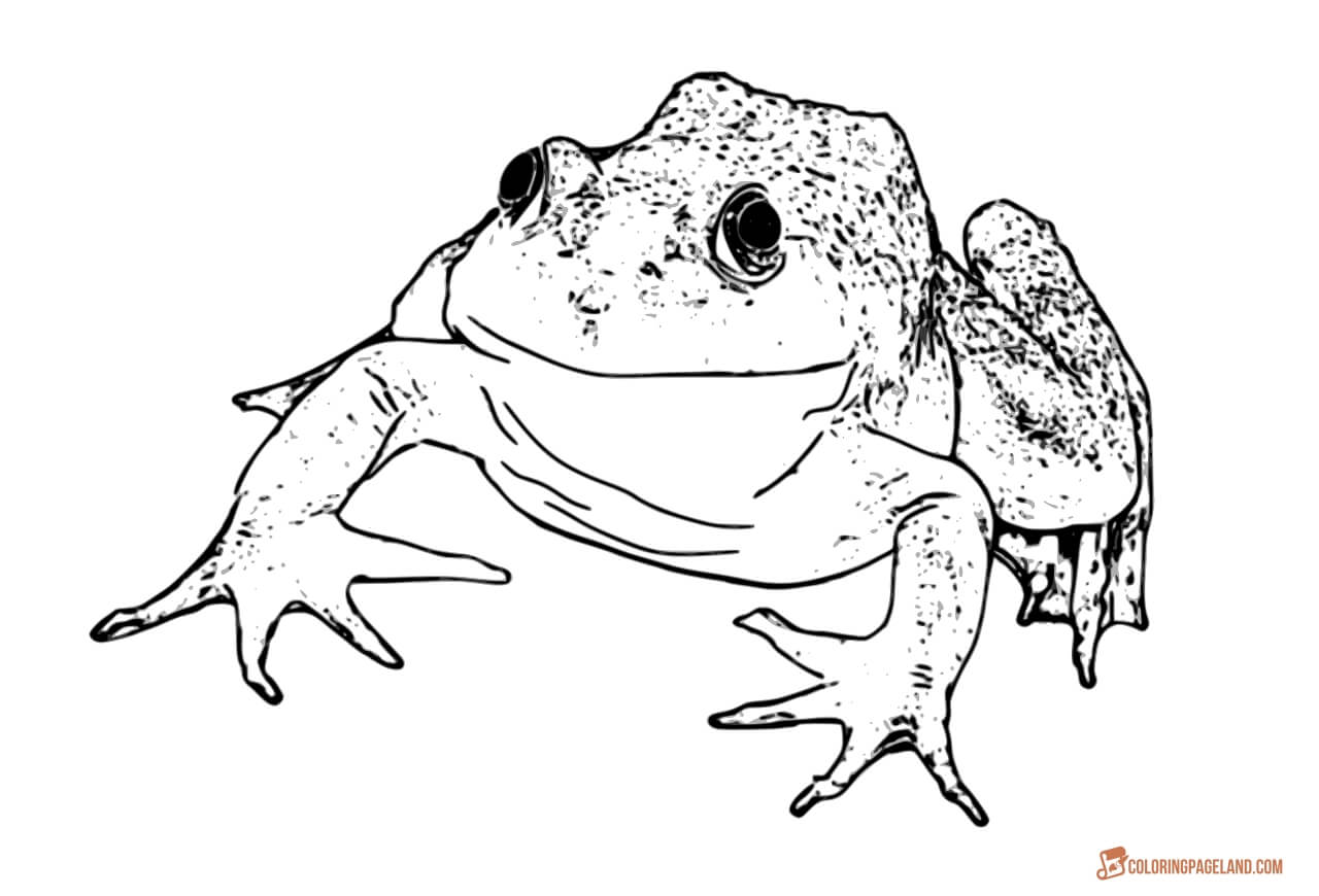 Realistic Frog Drawing at GetDrawings.com | Free for personal use ...