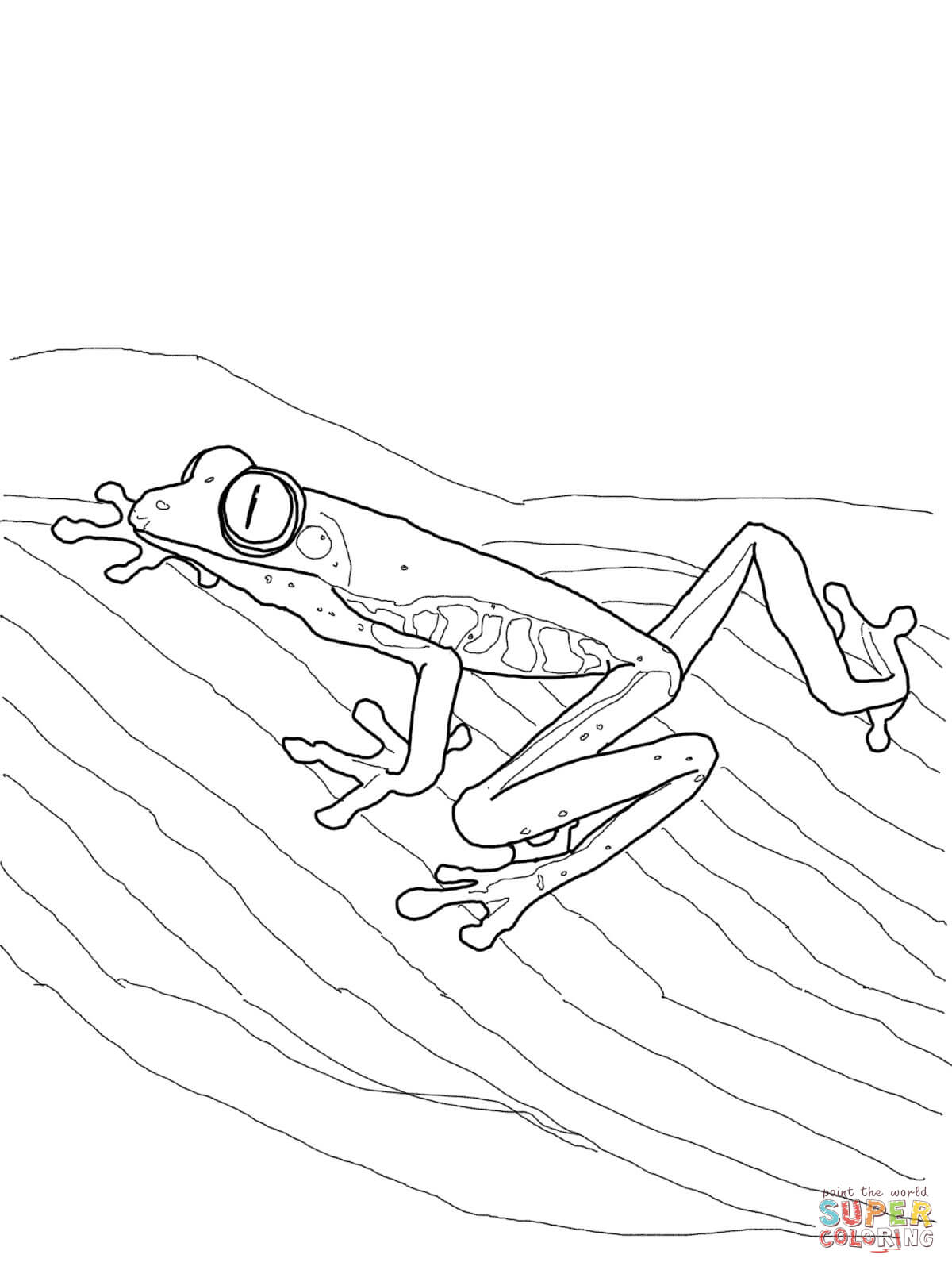 1200x1600 Red Eyed Tree Frog Drawing Red Eyed Tree Frog Coloring Page Free