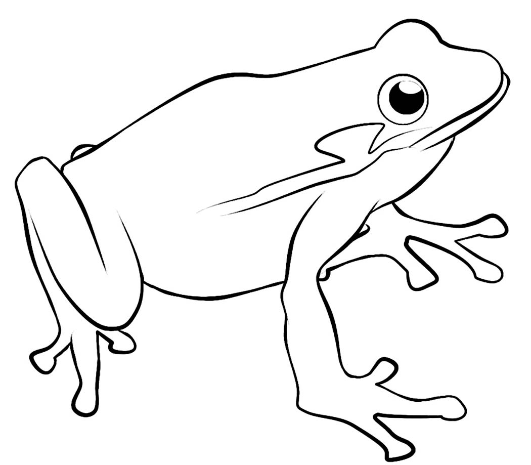 Realistic Frog Drawing at GetDrawings.com   Free for personal use ...