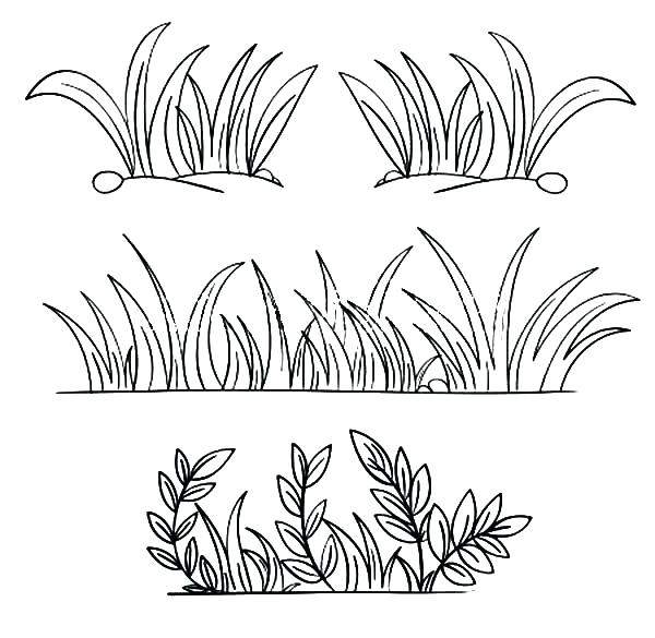 600x585 Grass Coloring Pages