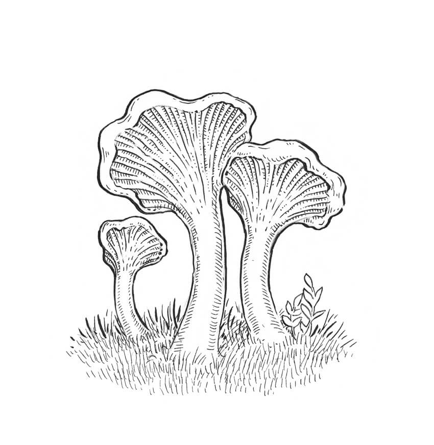 850x872 How To Draw A Mushroom
