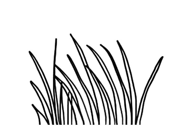 600x450 Long Grass Coloring Pages Color Luna