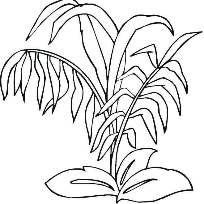 660x660 Plants Coloring Pages Grass Coloring Realistic Grass And Plants