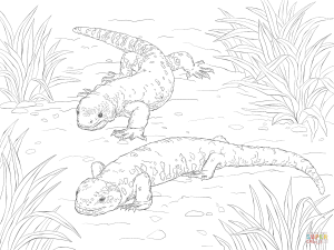 300x225 Realistic Chinese Water Dragon Download Coloring Pages