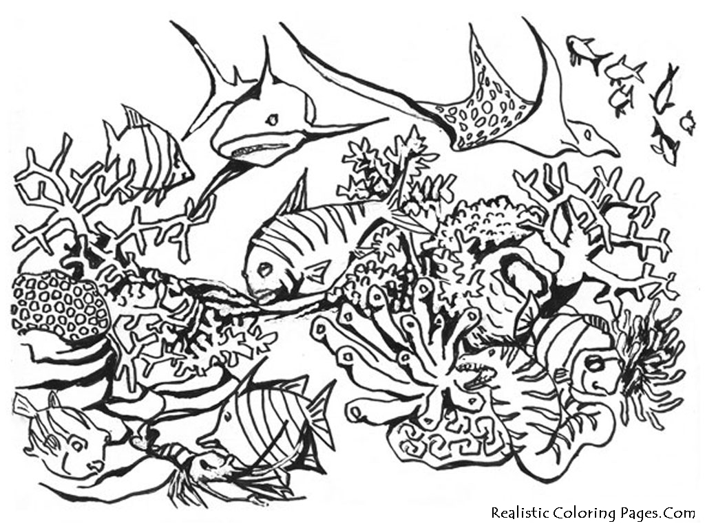 1024x768 Realistic Underwater Coloring Pages Color Bros