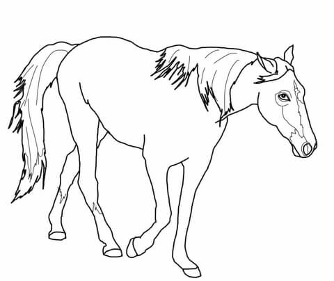 480x404 tennessee walking horse coloring page free printable coloring pages - Horse Color Page