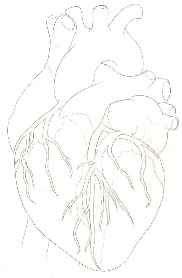 736x1123 Heart Ideas Human Heart Anatomic Heart Tattoo Anatomical Heart Art