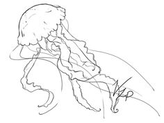236x178 Imgs For Gt Jellyfish Realistic Drawing Tattoo Ideas