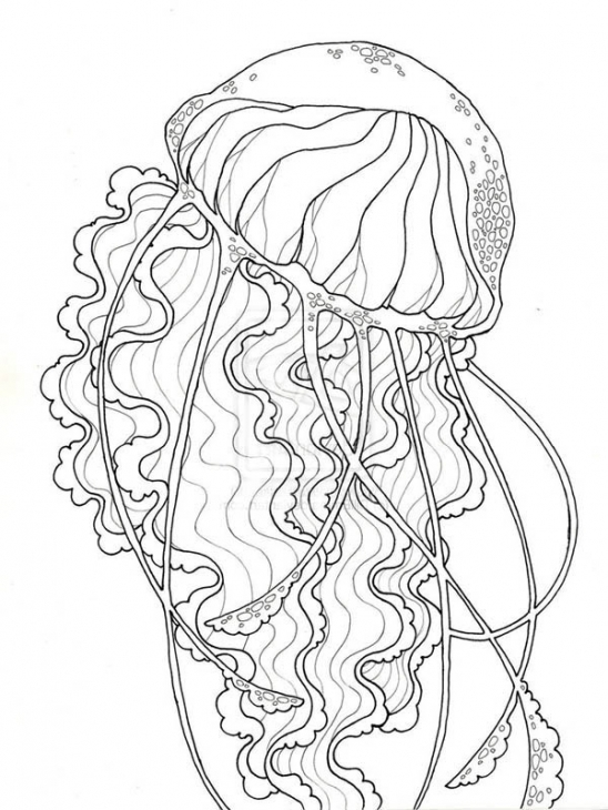 548x730 realistic jellyfish coloring pages color bros