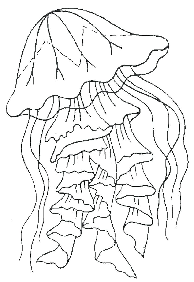 828x1200 Coloring Jellyfish Coloring Pages