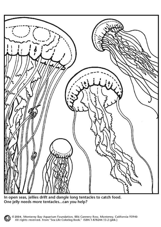 531x750 Coloring Page Jellyfish Coloring Project