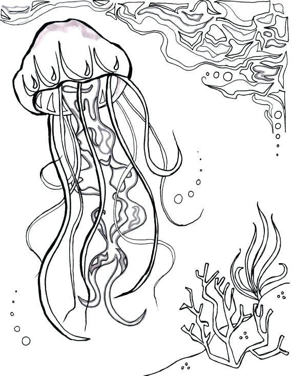 570x733 Fresh Jellyfish Coloring Page Print Jelly Fish Pages Lions