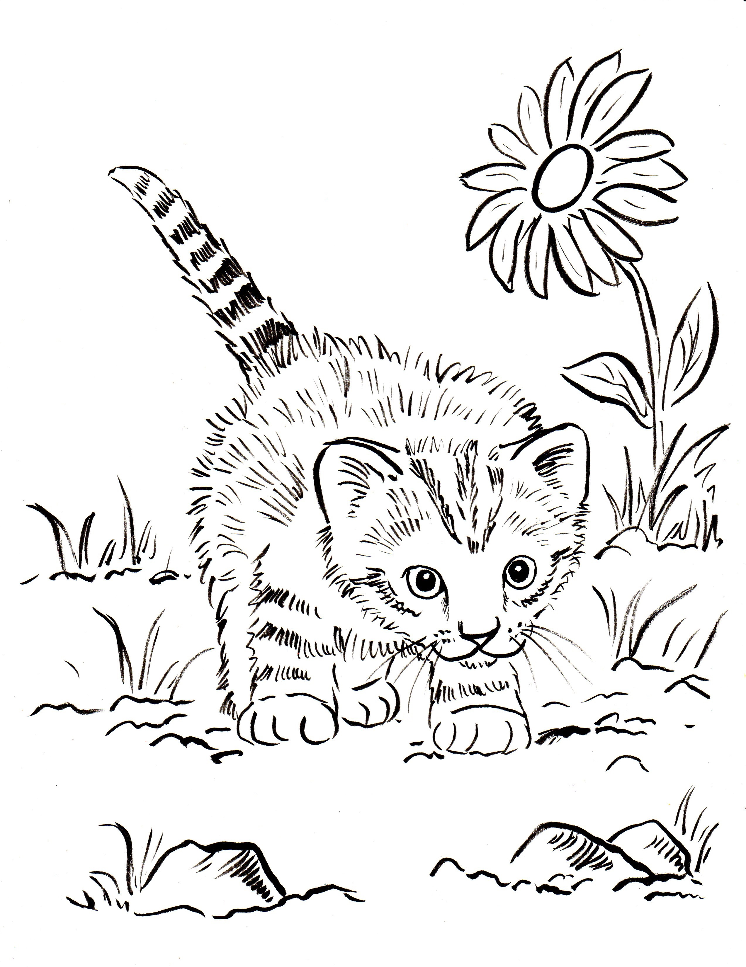 Realistic Kitten Drawing At Getdrawings Com Free For