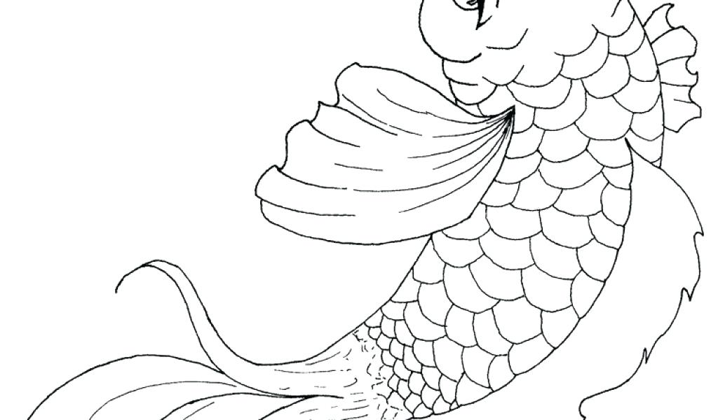 how to draw a realistic koi fish