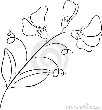 400x433 How to draw a sweet pea flower Sweet Pea Drawing Flower Ideas