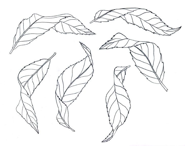 729x573 Day 21 Of Botanical Artist Mindy Lighthipe's 30 Day Botanical Leaf