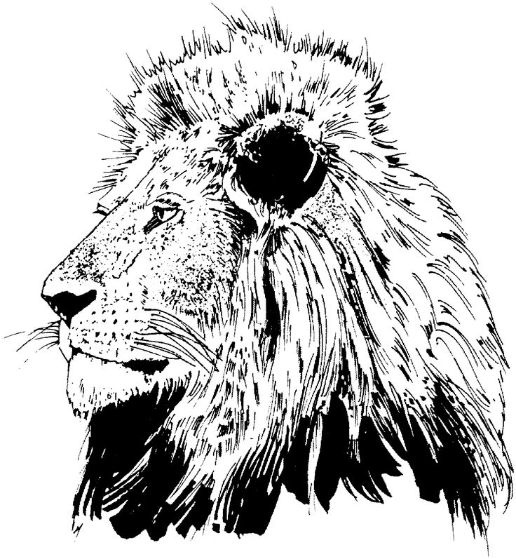 Realistic Lion Drawing at GetDrawings.com | Free for personal use ...