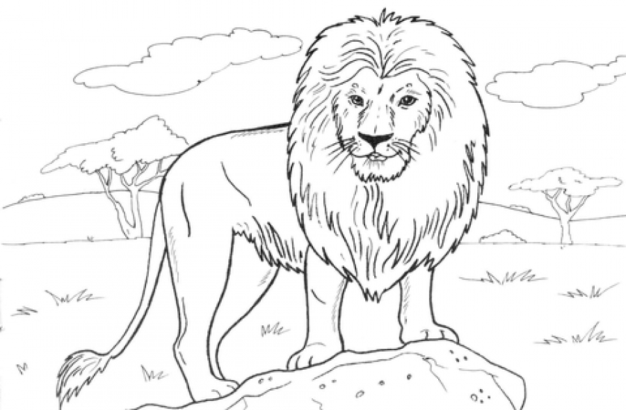 900x590 Free Printable Realistic Lion Coloring Page For Adults Animal