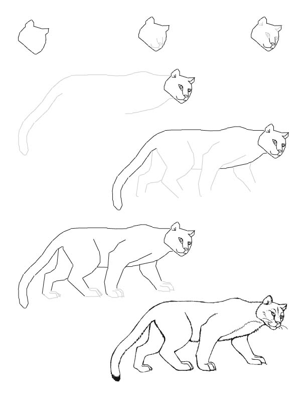 612x792 Mountain Lion Drawing Lesson Drawing Ideas Lion