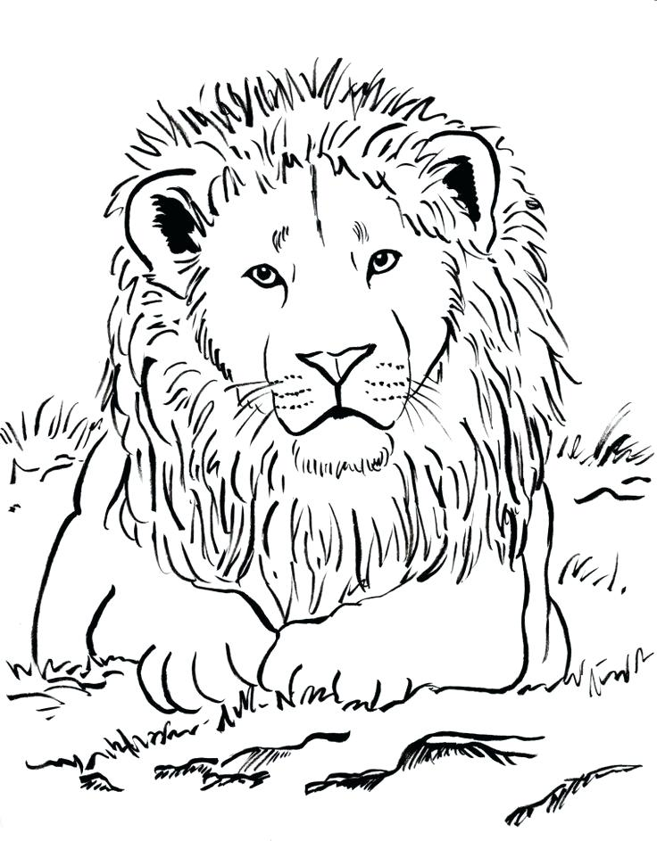 736x943 New Lion Color Page Free Download Best Coloring Pages Ideas