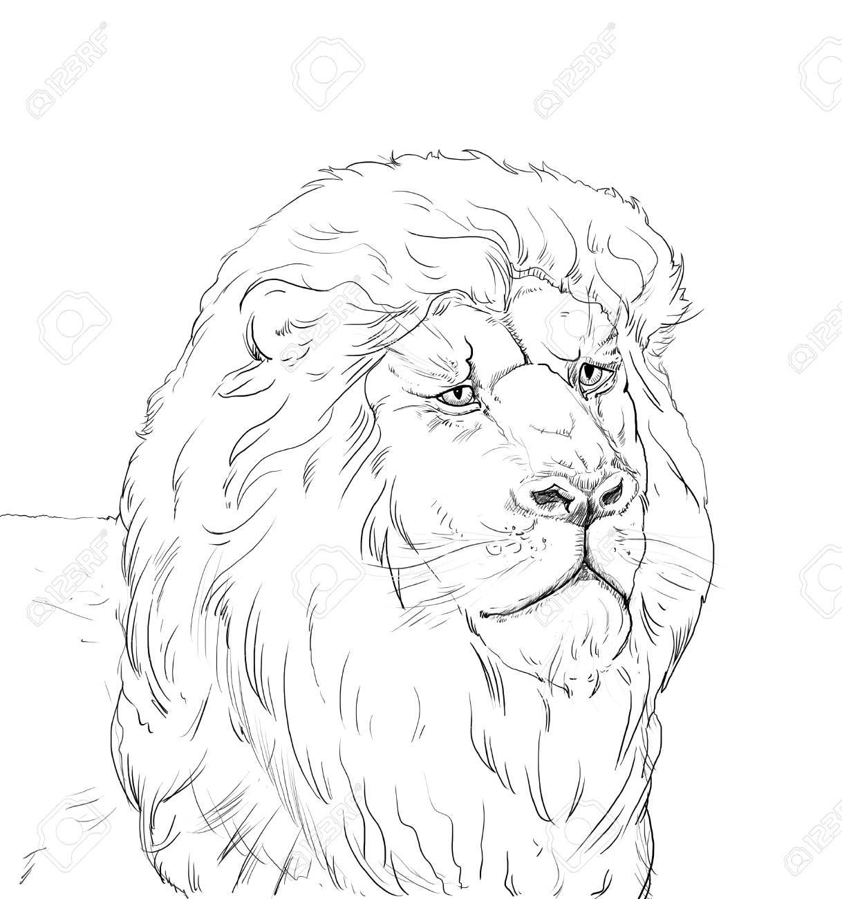 1218x1300 Portrait Of A Big African Lion On White Background, Africa. Hand