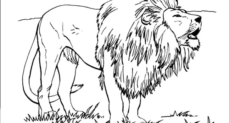 728x393 Realistic Lion Coloring Page Free Printable Lion Coloring Pages