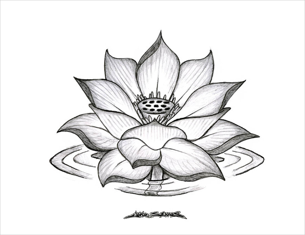 Realistic Lotus Flower Drawing