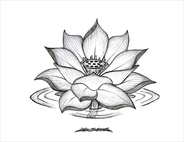 600x463 Flower Drawings